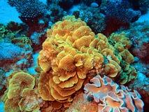 Corail en pierre Photos stock