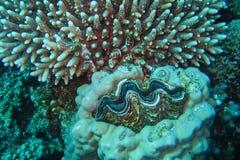 Corail et éponges en mer photos stock