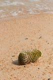 Corail et plage endommagés Images stock