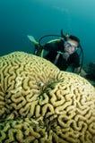 Corail et plongeur autonome Image libre de droits