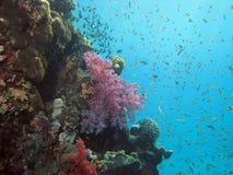 Corail et poissons Photographie stock