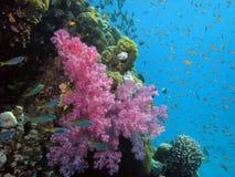 Corail et poissons Image libre de droits