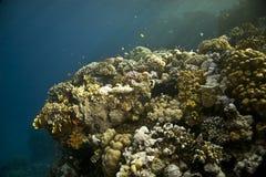 Corail et poissons Photographie stock libre de droits
