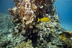 Corail et poissons image stock