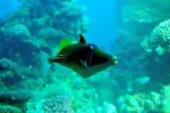 Corail et poissons de mer. Image stock