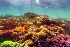 Corail et poissons en Mer Rouge Photographie stock libre de droits