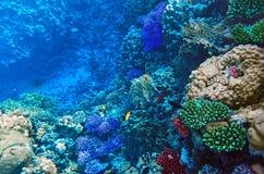 Corail et poissons en Mer Rouge. L'Egypte, Afrique. Photo stock