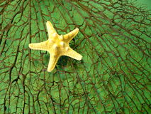 Corail et étoiles de mer noirs Photo libre de droits