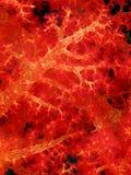 Corail mou Image libre de droits