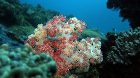 Corail mou de chardon photographie stock