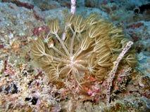 Corail mou de fleur Photographie stock libre de droits