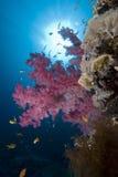 Corail mou vibrant photographie stock