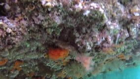 Corail orange de Sun clips vidéos