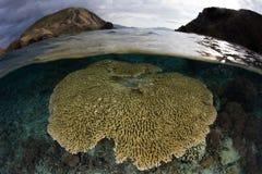 Corail peu profond de Tableau en parc national de Komodo, Indonésie photos libres de droits