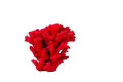 Corail rouge Photographie stock libre de droits