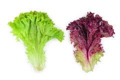Corail rouge frais et salade verte ou laitue d'isolement sur le fond blanc Vue supérieure Configuration plate image libre de droits