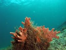 Corail sous la passerelle image libre de droits