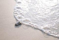 Corail sur la plage et la bulle Photo libre de droits