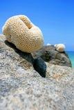 Corail sur le récif Images stock