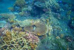 Corail tropical de poissons et de table Bord de mer exotique d'île Photo sous-marine de paysage tropical de bord de la mer Images stock