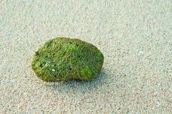 Corail vert Images libres de droits