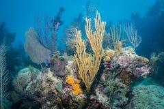 corais imagens de stock