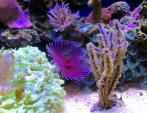 Corais imagens de stock royalty free