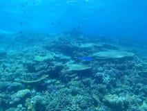 Corais bonitos Imagem de Stock Royalty Free