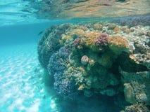 Corais de Colourfull imagens de stock royalty free