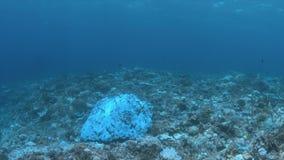Corais descorados filme