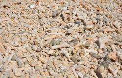 Corais do mar Imagens de Stock