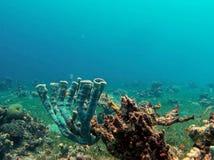 Corais do tubo Foto de Stock Royalty Free