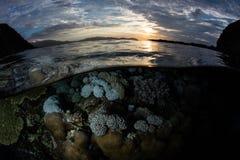 Corais e por do sol rasos no parque nacional de Komodo, Indonésia imagem de stock