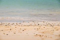 Corais e shell inoperantes fotografia de stock