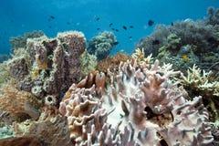 Corais macios Imagens de Stock Royalty Free