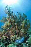 Corais macios Fotografia de Stock Royalty Free