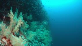 Corais macios na borda de um recife de corais 4K filme