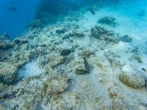 Corais maldivos do mar imagens de stock royalty free