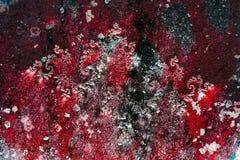 Corais na parede Imagem de Stock Royalty Free