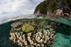 Corais que crescem a ilha próxima da pedra calcária em Raja Ampat Foto de Stock