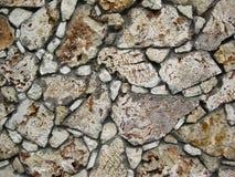 Corais rochosos inoperantes Fotos de Stock Royalty Free