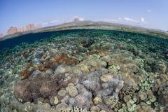 Corais saudáveis perto de Komodo Fotografia de Stock Royalty Free