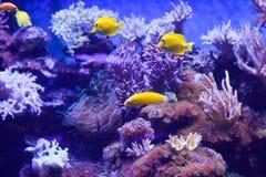 Corais sob a água imagem de stock royalty free