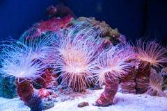 Corais vivos bonitos no fundo do mar fotografia de stock