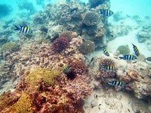 Corais zanzibar imagem de stock royalty free