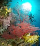 Coral, África do Sul Foto de Stock Royalty Free