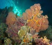Coral, África do Sul Imagem de Stock