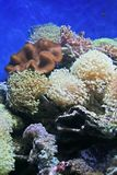 Coral. Empty fishtank with coral stock photos