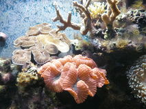 Coral. Reef at the aqvarium, marine life Stock Photos