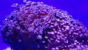 coral almacen de metraje de vídeo